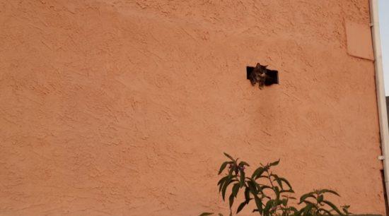 cat in the vent