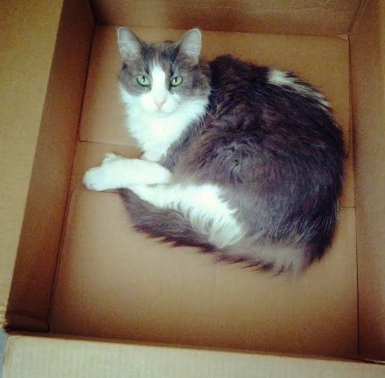 josie-in-a-box